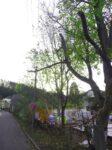 Pokácení rizikových stromů Náchod