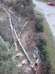 Extremní kácení stromů