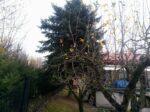 Kácení stromu u domu