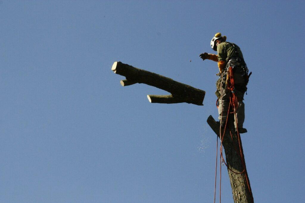 Kácení stromu Trutnov